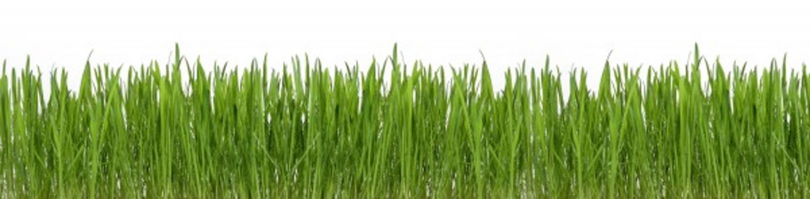 Rustperiode grasvelden